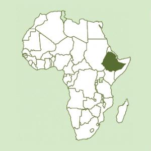 Ethiopia Natural Organic